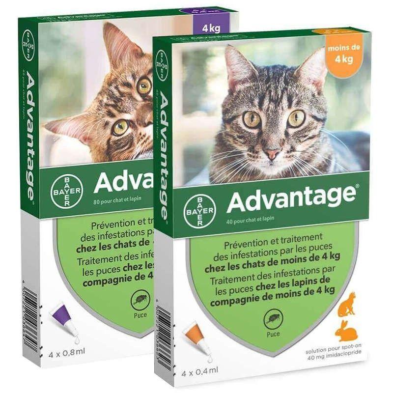 Advantage pipetas antiparasitárias para gatos e roedores