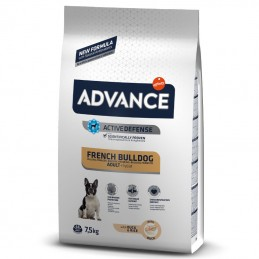 Advance French Bulldog Adult