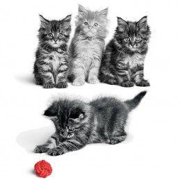 Royal Canin Kitten em molho