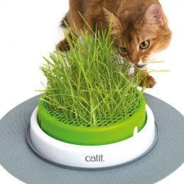 Catit Senses germinador erva para gatos
