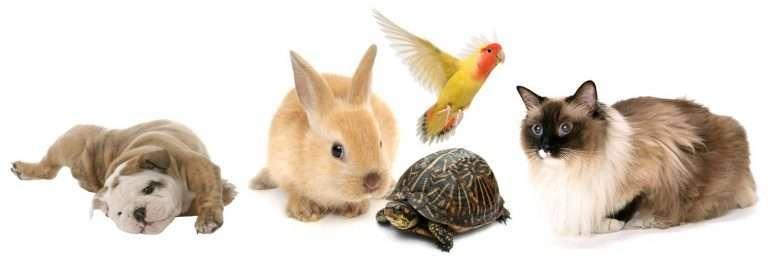 Anima-Strath-imagens-animais-768x258.jpg