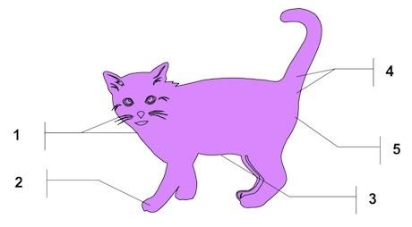 Cat-pheromone-producing-areas.jpg
