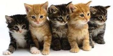 catmyfurstgroomer.jpg