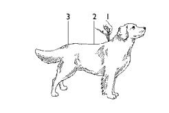 como-aplicar-advantage-cão.png